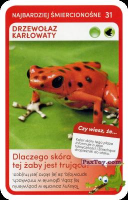PaxToy.com - 31 Drzewolaz Karlowaty из Biedronka: Super zwierzaki