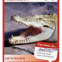 PaxToy 32 Krokodyl Rozankowy