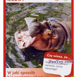 PaxToy 34 Hipopotam Nilowy