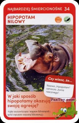 PaxToy.com - 34 Hipopotam Nilowy из Biedronka: Super zwierzaki