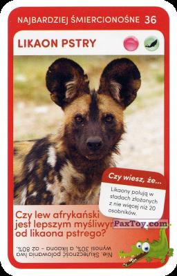 PaxToy.com  Карточка / Card 36 Likaon Pstry из Biedronka: Super zwierzaki