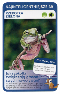 PaxToy.com - 39 Rzekotka Zielona из Biedronka: Super zwierzaki