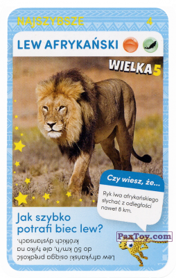 PaxToy.com - Карточка 4 Lew afrykanski из Biedronka: Super zwierzaki