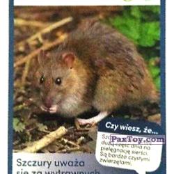 PaxToy 40 Szczur Wedrowny