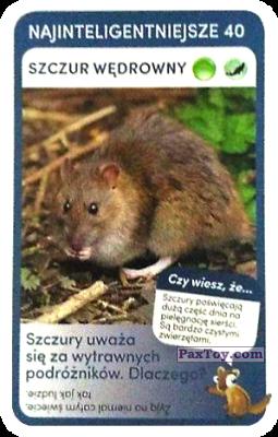 PaxToy.com - 40 Szczur Wedrowny из Biedronka: Super zwierzaki