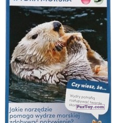 PaxToy 42 Wydra Morska