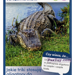PaxToy 43 Aligator Amerykanski
