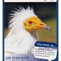PaxToy 44 Scierwnik