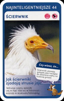 PaxToy.com - 44 Scierwnik из Biedronka: Super zwierzaki