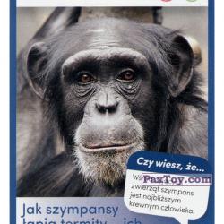 PaxToy 47 Szympans