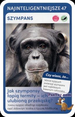 PaxToy.com - 47 Szympans из Biedronka: Super zwierzaki