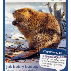 PaxToy 48 Bobr Kanadyjski