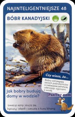 PaxToy.com - 48 Bobr Kanadyjski из Biedronka: Super zwierzaki
