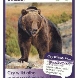 PaxToy 49 Niedzwiedz Grizzly