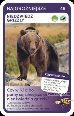 PaxToy.com - 49 Niedzwiedz Grizzly из Biedronka: Super zwierzaki