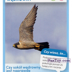 PaxToy 5 Sokol wedrowny