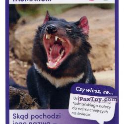 PaxToy 50 Diabel Tasmanski
