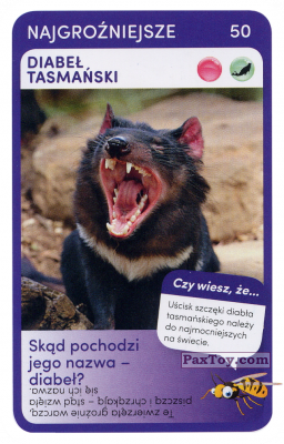 PaxToy.com - 50 Diabel Tasmanski из Biedronka: Super zwierzaki