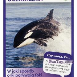 PaxToy 51 Orka Oceaniczna