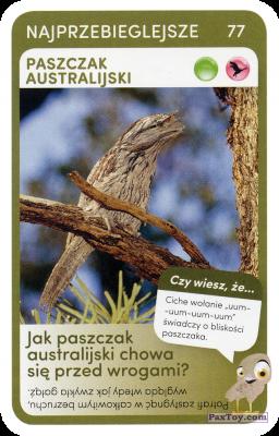PaxToy.com  Карточка / Card 77 Paszczak Australijski из Biedronka: Super zwierzaki