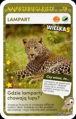 PaxToy.com  Карточка / Card 78 Lampart из Biedronka: Super zwierzaki