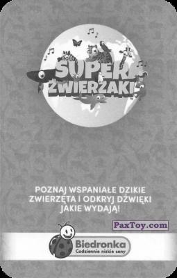 PaxToy.com - Карточка 42 Wydra Morska из Biedronka: Super zwierzaki