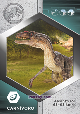 PaxToy.com - 31 Velocirraptor Macho из Supermercados DIA: Jurassic World - Cards